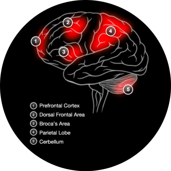 Brain Activity With Working Memory