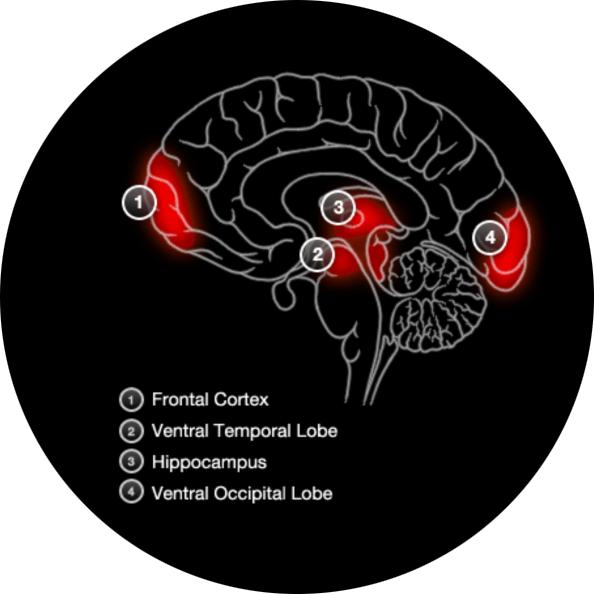 Brain Activity Recognising Faces