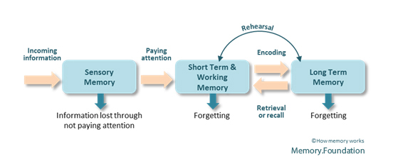 I m 67 i want to keep on working memory foundation for How do foundations work